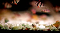Shoal of fish. video