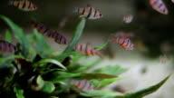 Shoal of fish video