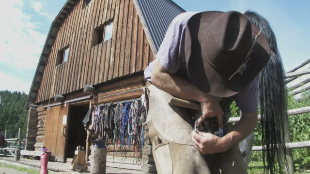 Shoeing a horse video
