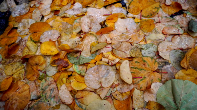 Shooting close-up of autumn leaves in dew on stone pavement in city on cool morning video