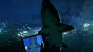Shooting shark with digital tablet in oceanarium video