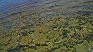 Shoreline video