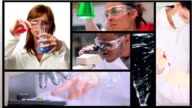 Short clips showing lab assistants video