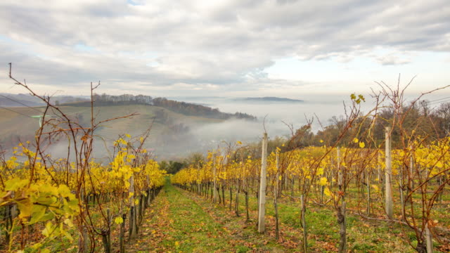 T/L 8K shot of a cloudscape over autumn vineyards video
