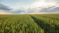 T/L 8K shot of a cloudscape over wheat field video