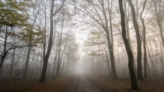 T/L 8K shot of a footpath through foggy forest video