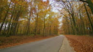 shot of a road through autumn forest video