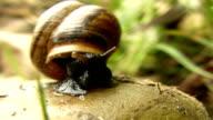 HD MACRO: Shot Of A Snail video