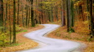 shot of a winding road through autumn forest video