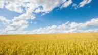 T/L 8K shot of cloudscape over golden wheat video