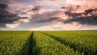 T/L 8K shot of cloudscape over tracks in wheat field video