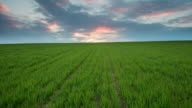 T/L 8K shot of cloudscape over young wheat plants video