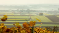T/L 8K shot of cultivated fields in the fog video
