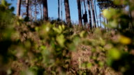 Shot of determined afro-american sprinting in forest video