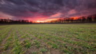 T/L 8K shot of dramatic cloudscape over young wheat plants video