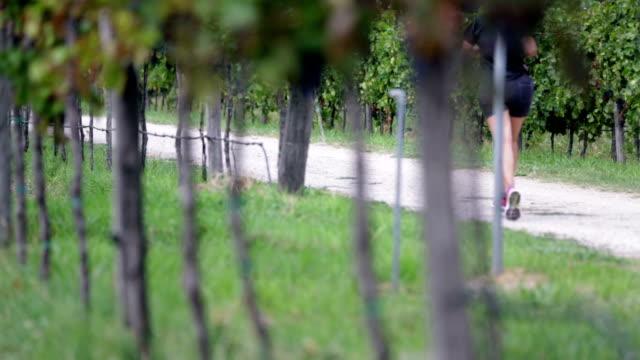 HD: Shot of macadam path through grape stems video