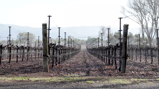 Shot of vineyard in winter video