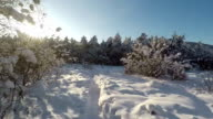 Shot through snowy forest trees in the winter Full HD video