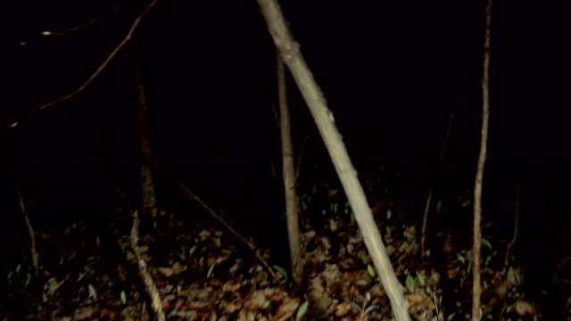 POV shot walking/running through dark spooky forest at night video