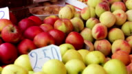Showcase Fruits video