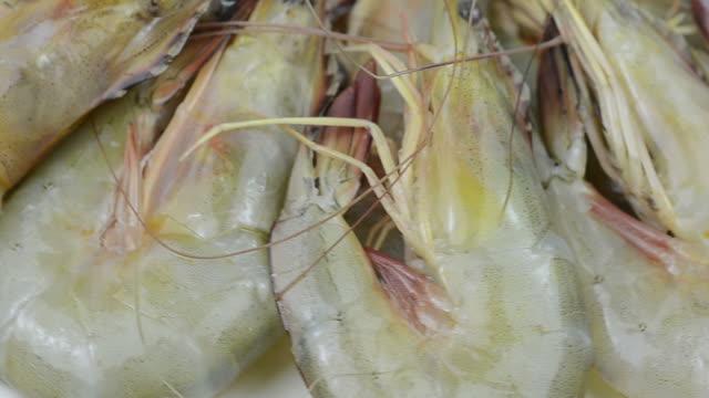 Shrimp video
