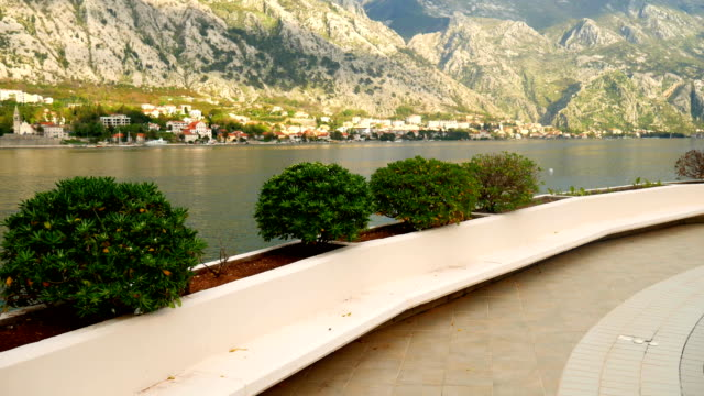 Shrubs and trees Pittosporum in Montenegro. Landscaping design o video