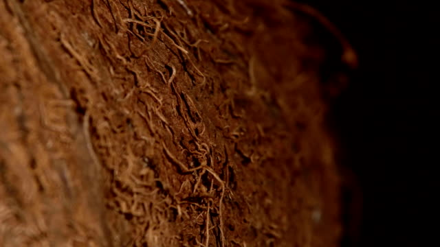 Side of coconut isolated on black, rotation video
