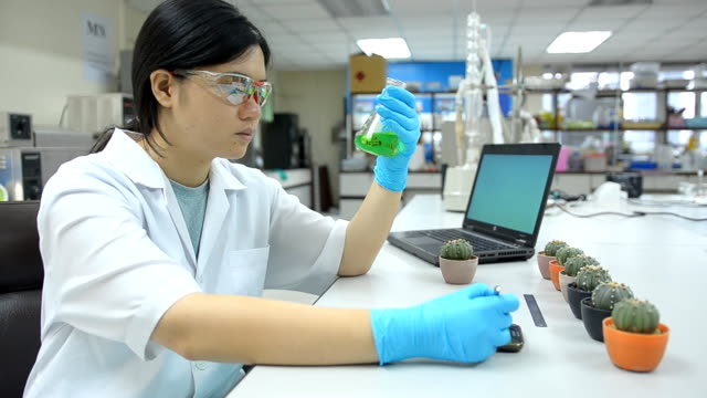 side panning : women researcher studies cactus tree video