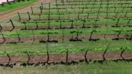 Side ways pan across field Aerial Wine to Market or Farm to Market in Austin Texas video