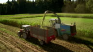 HD: Silage Harvester Cutting The Corn video