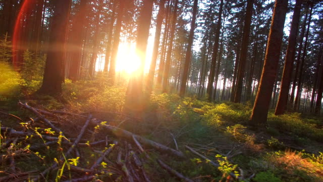 Silent Forest in spring with beautiful bright sun rays video