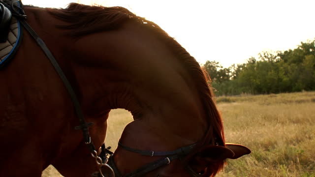 Silhouette of a beautiful brown horse in the sun. video