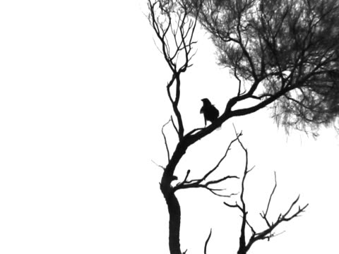 Silhouette Of A Bird On Tree video