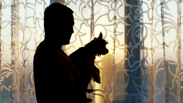 Silhouette of a man with a dog in her arms. Standing at the window at sunset, stroking Yorkshire terrier video