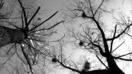 Silhouette of flying crows video