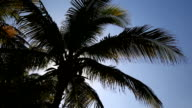 Silhouette of palm on sky background video