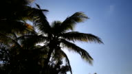 Silhouette of palm tree on  sky background video