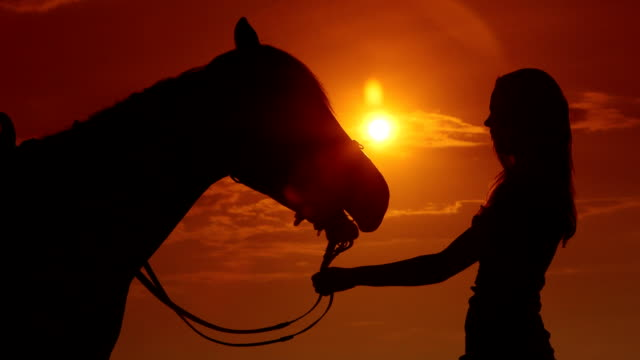 Silhouette of young girl rider with horse against sun video