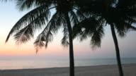 Silhouette palm tree video