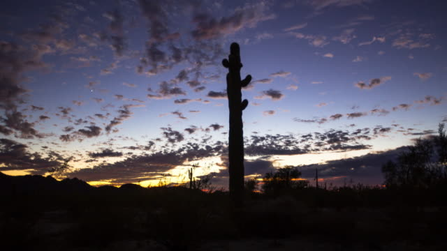 Silhouetted Saguaro Cacti at Desert Sunset - Time Lapse video