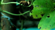 silkworms with leaves on the woven basket video