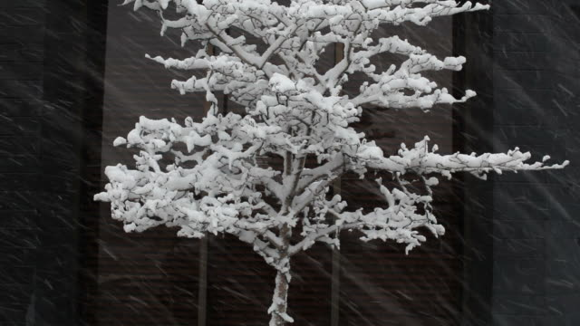 HD: Simple Winter Snowing on Tree Shot video
