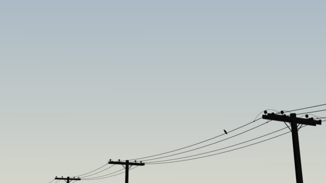 Single Bird Flying From Wire video