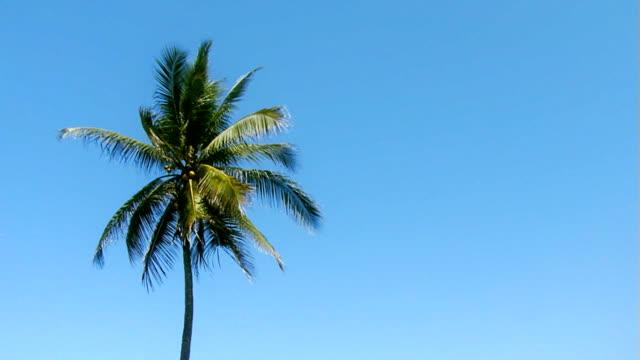 Single palm in skyline video