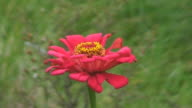 Single Red Flower in A Prairie video