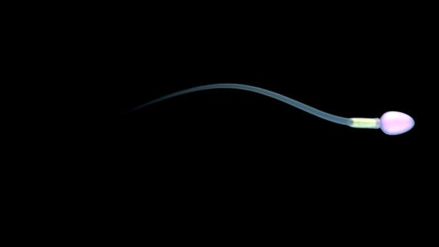 Single spermatozoon with alpha matte video