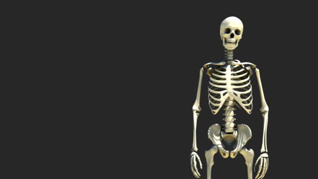 Skeleton Presentation 2 video