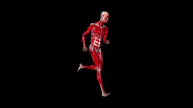Skeleton running morphing into Human, loop, black video
