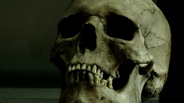 skull: archaeological find in a museum video