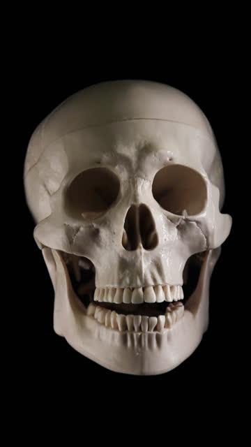 Skull talking, isolated, vertical video